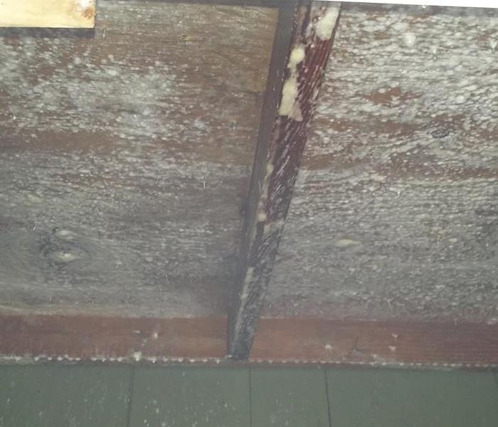 Mold in an Apartment Complex in Spokane, Washington Before