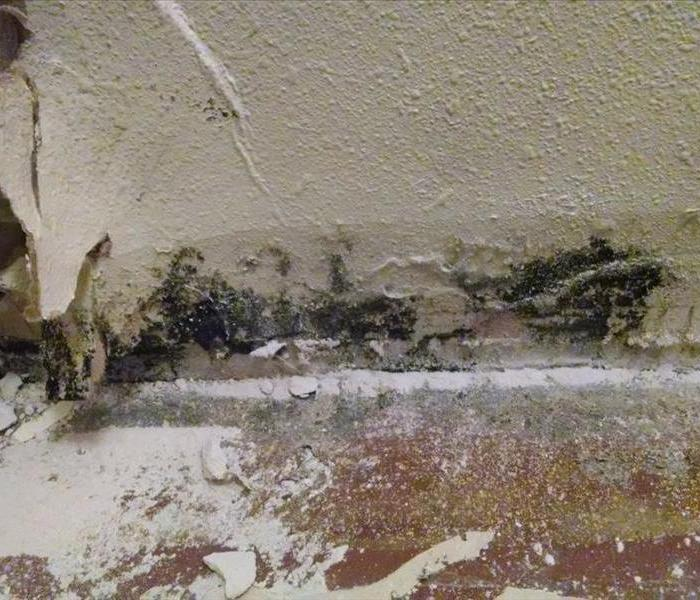 Basement Mold Removal Spokane Valley Before ...