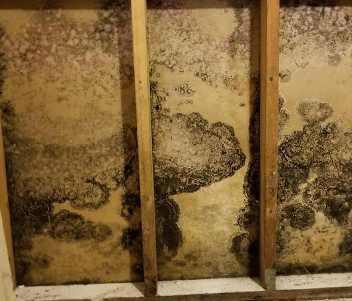 Mold Remediation 3 Reasons Why Mold Has an Odor