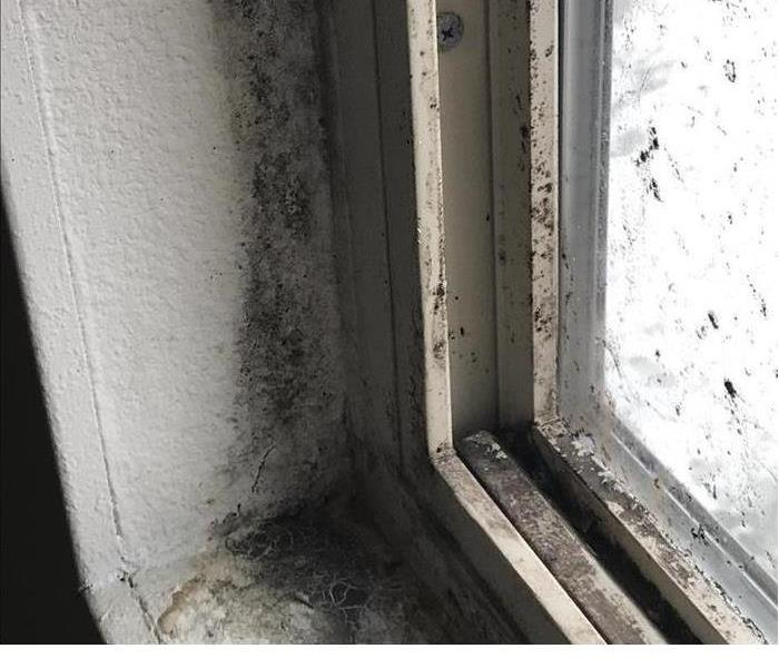 Mold Remediation What To do When Mold Problems Become an Emergency