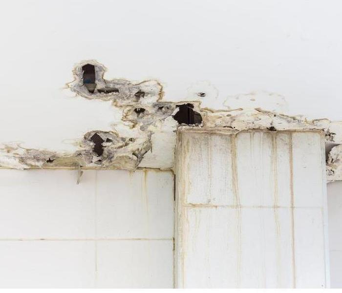 Mold Remediation What's the Best Way to Prevent Mold Growth
