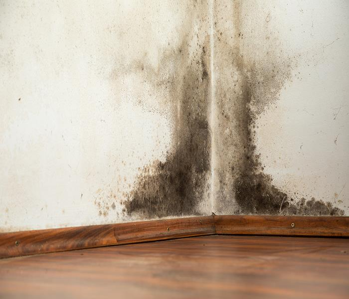 Mold Remediation Spokane Mold Removal - Why You Need Professional Mold Removal in Spokane