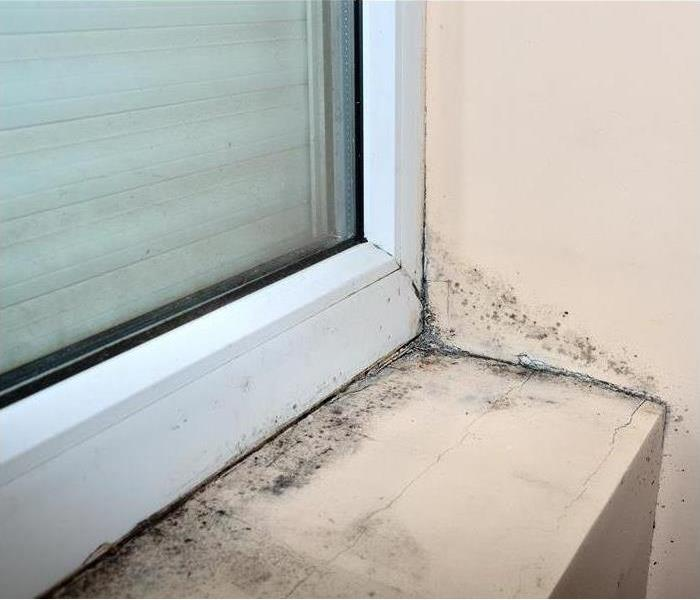 Mold Remediation In Chattaroy, SERVPRO's Mold Remediation Service Is Ready To Help.